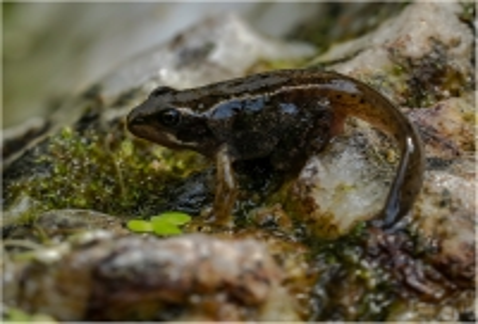 Frogpole_Richard Hipwell DPI_(015.0)