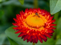 Hover Fly_Tom Leach Jpegs_(014.0)