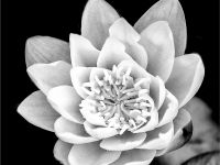 White flower_Andy Lewis_(017.0)