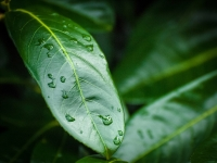 Droplets on Leaf_Andy Lewis Prints_(015.0)