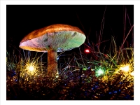 Magic mushroom_Richard Hipwell Prints_(017.0)