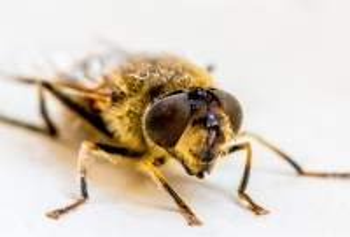 Wasp_Rebecca Newman prints_(014.0)