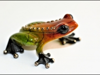 Frog_Peter-Armstrong-PDI_012.0