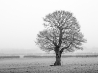 A-Lonesome-Tree-in-the-Mist_Tony-Stores-Prints_012.0.jpg