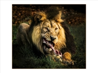 Feed-Me-To-The-Lions_Julie-Simpson-PRINTS_015.0