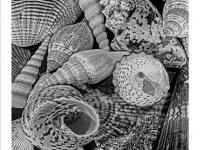 texture of shells_Mickey Anders prints_(015.0)_