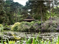 Tatton park_Andy Lewis_(016.0)_