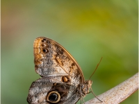 Butterfly_Kay-Newman-013.0